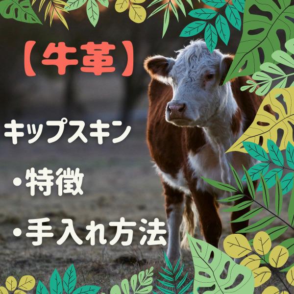 【牛革】キップスキン 特徴・手入れ方法
