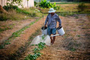 「借金地獄・農薬漬け・自殺」インドの綿花農家の現状の原因とは?